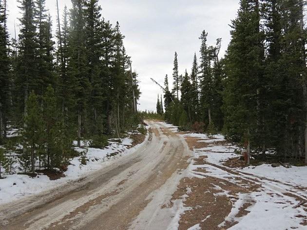 Christmas Tree Permits Colorado