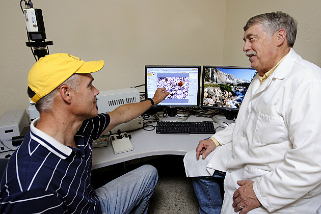 Graduate student Kormakur Hognason, left, assists University of Wyoming Animal Science Professor Steve Ford on a project to find ways to reduce obesity in the U.S. and around the world. The research is funded with a $1.5 million grant from the National Institutes of Health.
