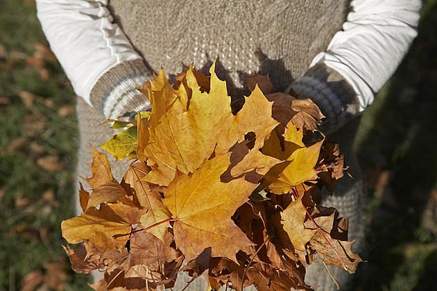 82633081 leaves